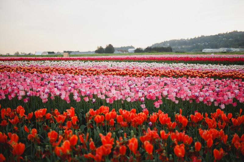 Tulip Festival-104
