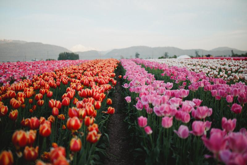 Tulip Festival-116