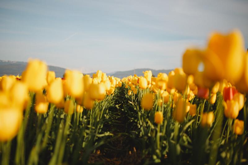 Tulip Festival-20