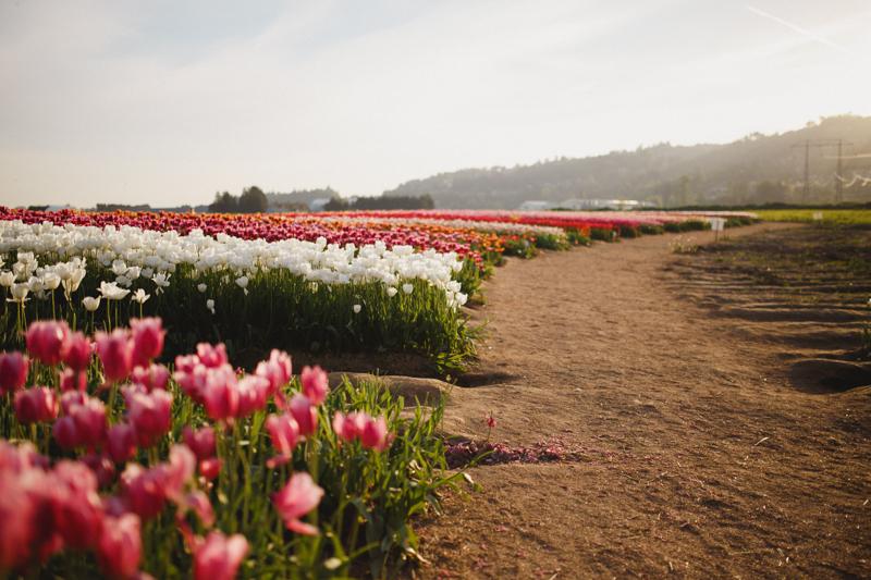 Tulip Festival-46