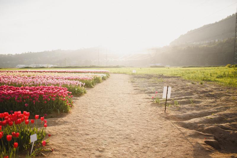 Tulip Festival-49